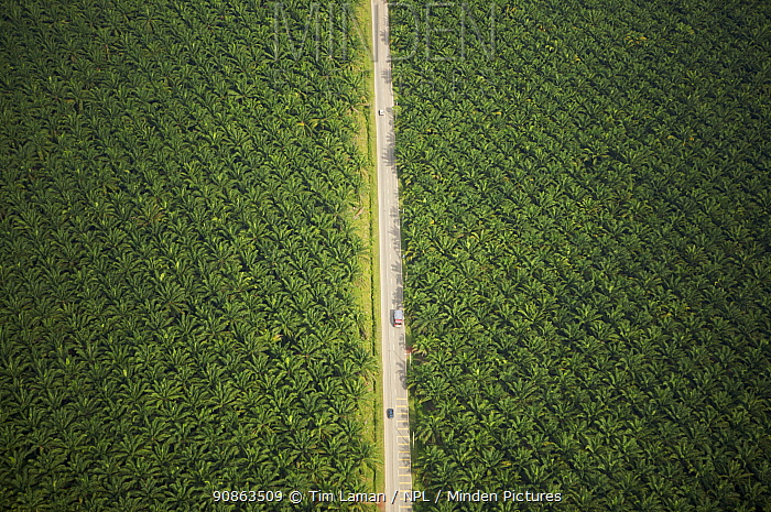 Aerial view of road running through oil palm plantation. Sungai Petani vicinity, Kedah, Malaysia. May 2006
