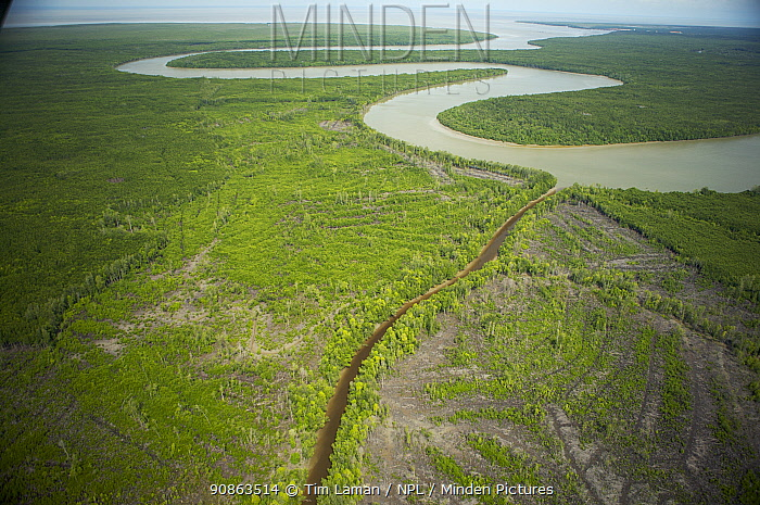 Aerial view of Matang mangrove forest, site of 100 year old managed mangrove harvesting program for charcoal production on a 30 year rotation. Taiping vicinity, Perak, Malaysia. May 2006