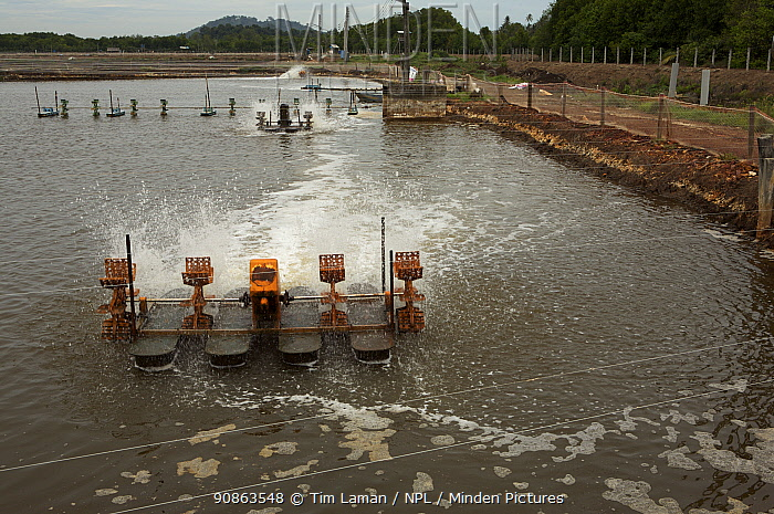 Industrial scale shrimp farm with aerators in operation. Kedah, Malaysia. May 2006