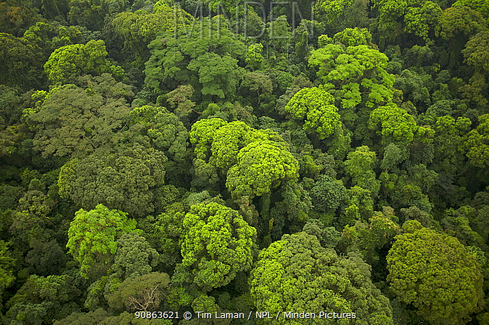 Aerial view of rainforest canopy on southern coastal area of Bioko Island, Equatorial Guinea, Central Africa. January 2008