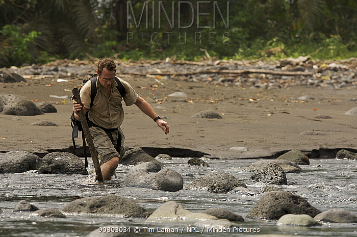 Photographer, Christian Ziegler, wades across the Rio Ole, Bioko Island, Equatorial Guinea, Rapid Assessment Visual Expedition, International League of Conservation Photographers, January 2006. Model released