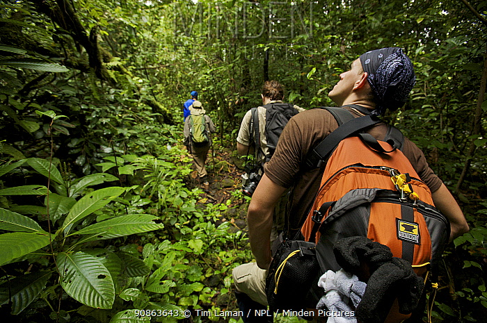 Expedition crew members hike in the forest of Bioko Island, Equatorial Guinea, Rapid Assessment Visual Expedition, International League of Conservation Photographers, January 2008. Model released