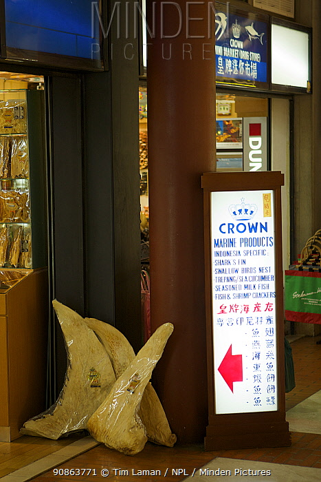 Store selling shark fins and other marine products in an airport in Indonesia. June 2007