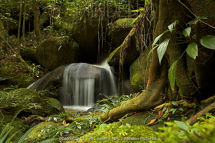Small waterfall on a creek / stream in the rainforest of Borneo