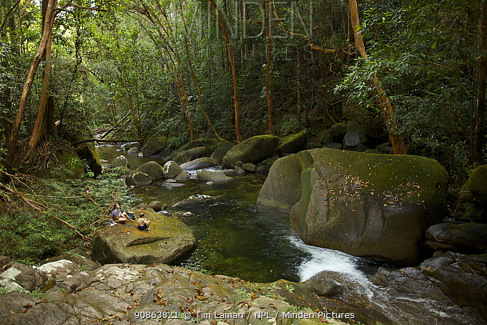 Rainforest river, with cascade and swimmers at swimming hole. July 2007