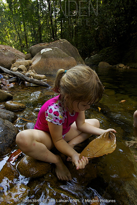 Young girl (model released) crouched in stream drinking from a leaf, tropical rainforest, Borneo, July 2007