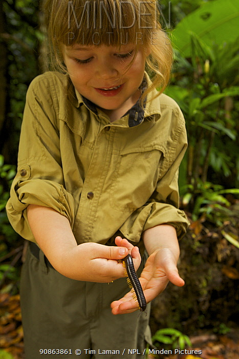 Young girl (model released) holding Giant millipede, tropical rainforest, Borneo, July 2007