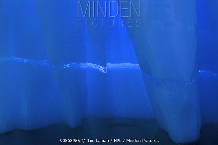 Iceberg detail, Antarctica, February