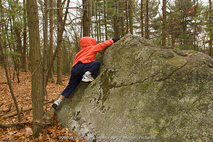Young boy (four years) climbing a rock in the woods, Lexington, Massachusetts, USA. December 2004, Model released