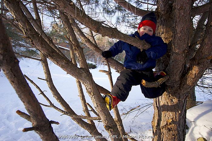 Boy (five years) climbing pine tree in winter, Lexington, Massachusetts, USA. December 2005, Model released