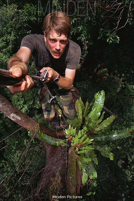 Selfportrait of biologist / photographer Tim Laman climbing a rope into the rainforest canopy, Gunung Palung National Park, Borneo, West Kalimantan, Indonesia. Model released. 1995.