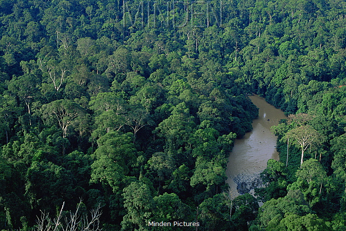 View of lowland dipterocarp rainforest and river in Danum Valley Conservation Area, Sabah, Borneo, Malaysia