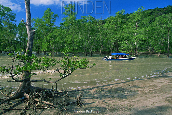 Tourists arrive by boat to the mangrove forests of Bako National Park, Sarawak, Malaysia, Borneo
