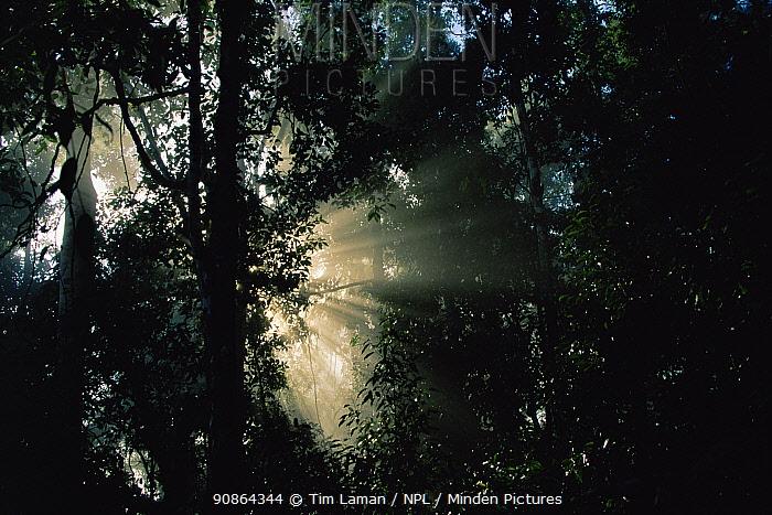 Sunlight at sunrise shining through morning mist in the lowland rainforest, Danum Valley Conservation Area, Sabah, Malaysia, Borneo.