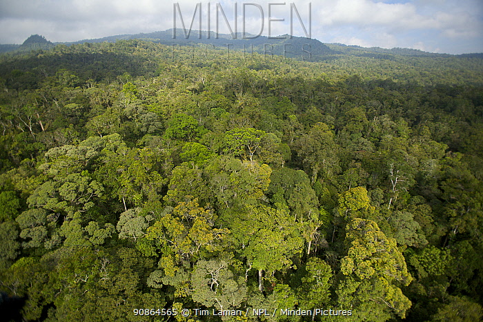 Aerial view of the Foja Mountains rainforest. June 2007.