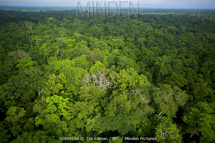 Aerial view of lowland rainforest at the foot of the Foja Mountains. Foja Mountains, Papua, Indonesia, June 2007.