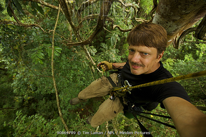 Photographer Tim Laman ready to rappel after shooting from his canopy platform. Oransbari, Bird's Head Peninsula, West Papua, New Guinea. August 2009
