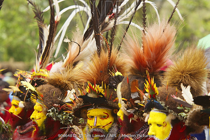 Huli 'singsing' dance ceremony. Huli wigmen wearing human hair wigs and feathers of various birds of paradise and other bird species. Tari Valley, Southern Highlands Province, Papua New Guinea. November 2010