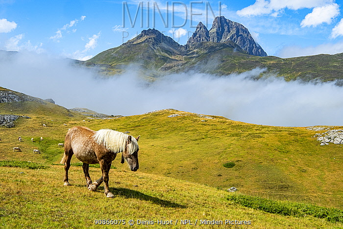 Horse at Portalet pass, Aragon, Spain ,near border with France in the Pyrenees, August.