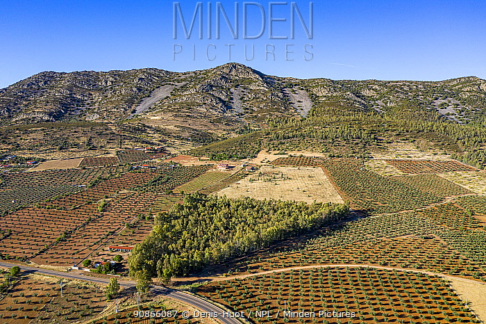 Aerial view of tree plantations and landscape, near Alange reservoir, Extremadura, Spain. June 2019.