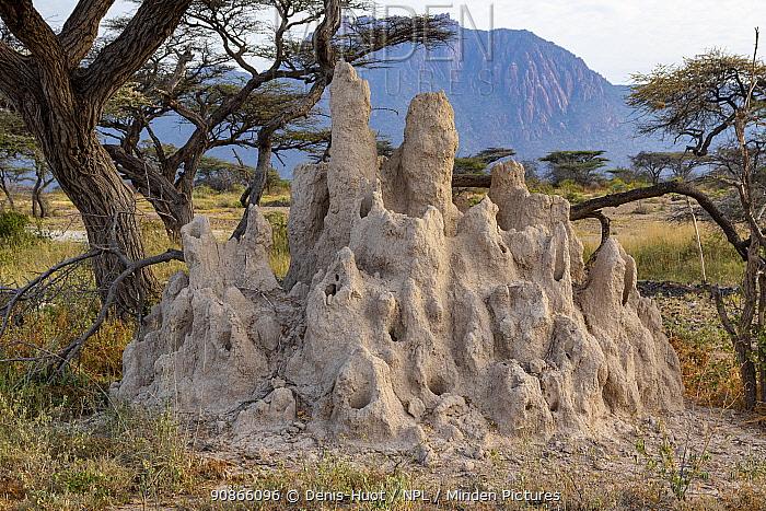 Termite hill and acacia tree, Shaba National Reserve, North Kenya