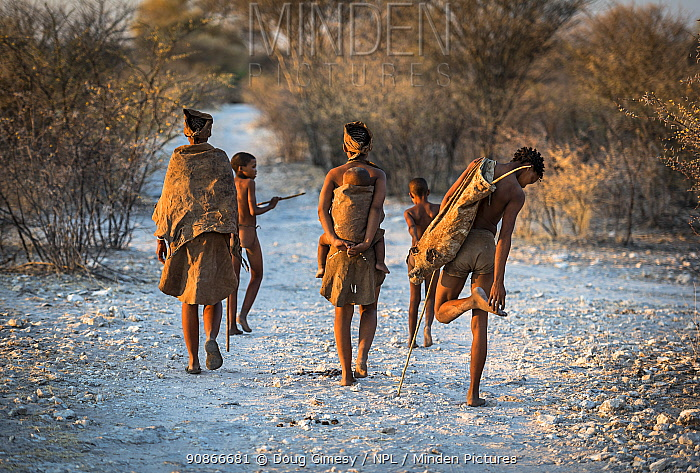 Three generations of San people, also known as a Kalahari bushmen, walking along a path in the Kalahari Desert around sunset. Image includes a grandmother on the left, a mother carrying her baby, a young man on the right and two young boys. Kalahari Desert, Botswana September, 2016. Editorial use only.