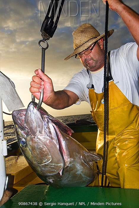Fisherman with Bigeye tuna (Thunnus obesus) caught with artisanal / selective fishing technique.Tenerife. Canary Islands.