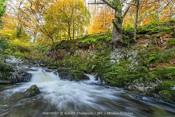 Shimna River Tollymore Forest, Shimna River Tollymore Forest Newcastle, County Down, Northern Ireland.