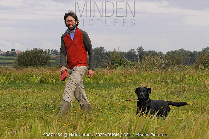 RSPB warden Harry Paget-Wilkes and Black labrador (Canis familiaris) approaching young Eurasian / Common cranes released by the Great Crane Project during a predator aversion training exercise, Somerset Levels, England, UK, September 2012. Model released.