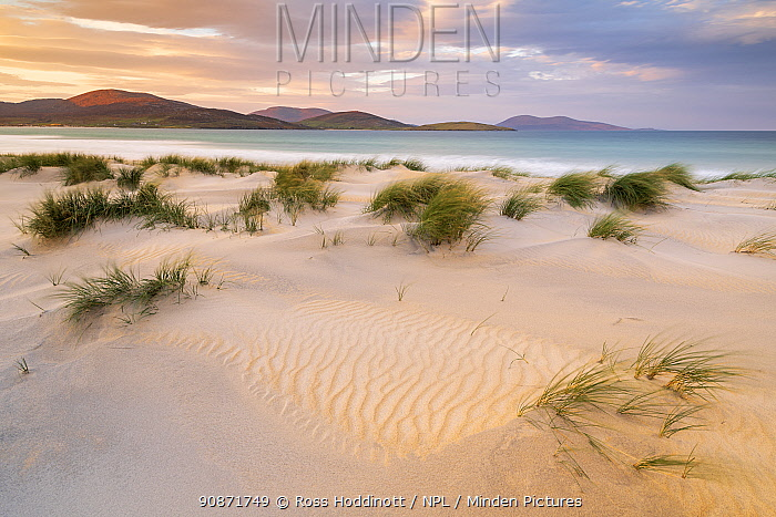 Luskentyre beach/sands, marram grasses and early morning sunlight, Isle of Harris, Outer Hebrides, Scotland, UK. October 2018.