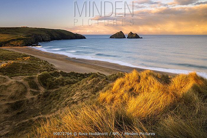 Sand dunes and warm early morning light at Holywell Bay, looking towards Carter's Rocks, near Newquay, Cornwall, UK. January 2021.