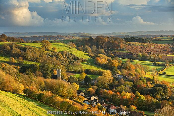 Autumn colours, Corton Denham, Somerset, England, UK. November 2018.