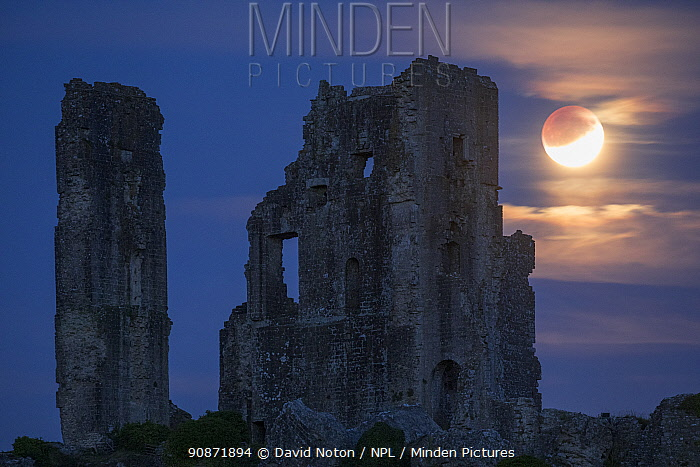 The partially eclipsed moon over Corfe Castle, Dorset, England, UK. July 2019.