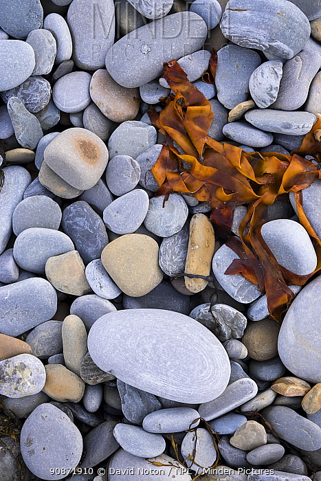 Rocks and seaweed on the beach at Skaill, west coast of Mainland, Orkney Isles, Scotland. October 2020.
