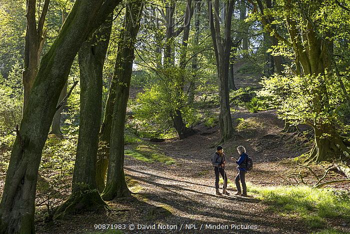 Women walking in Lewesdon Hill Woods, Dorset, England, UK. September 2020.