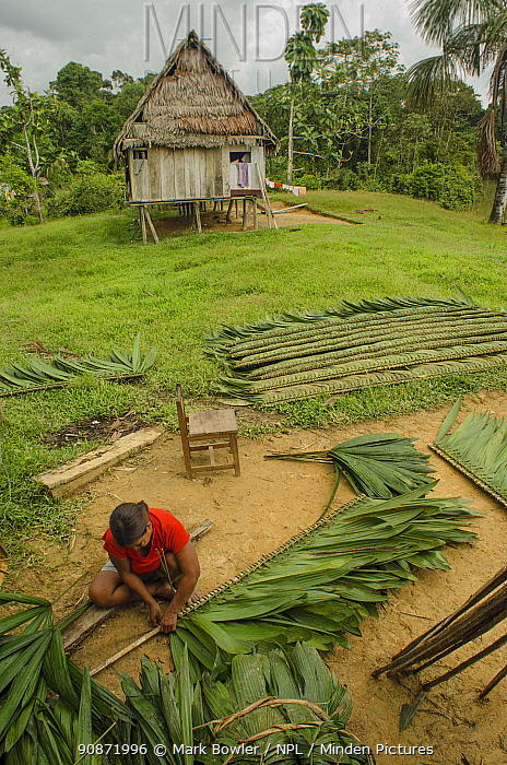 Woman tying palm leaves around wood to create roofing, Maijuna Indigenous Community, Rainforest, Sucusari, Rio Napo, Loreto, Peru. January 2013.