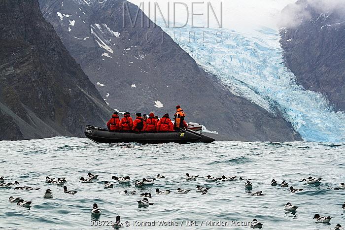 Zodiac boat with tourists at Elephant Island. Raft of Cape Petrels, (Daption capense) on surface, South Shetland Islands, Antarctic Peninsula, Antarctica. February.