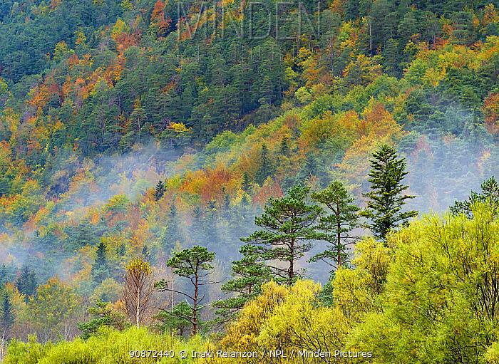 Mixed decidious forest, autumm, Ordesa National Park, Aragon, Pyrenees, Spain