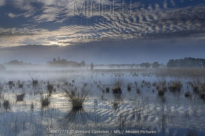 Landscape of fen and clouds, Klein Schietveld, Brasschaat, Belgium, May 2021.