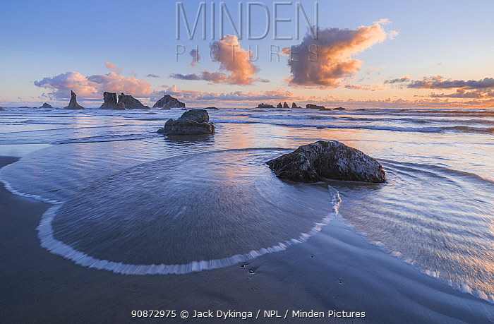 Oregon Coastal Seastacks with tidal flow and wave action. The Sea Stacks are a protected home to thousands of sea birds, off Face Rock State Scenic Viewpoint, Bandon, Oregon, USA.