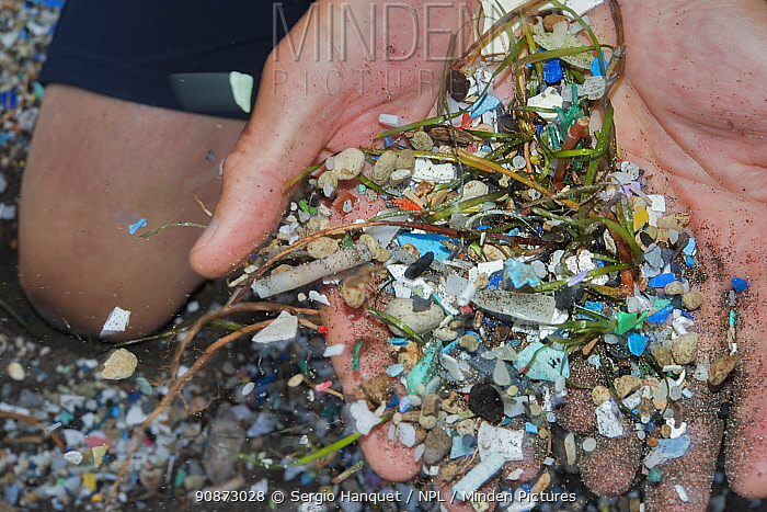 Person holding plastic and microplastics from the beach, brought in by the winds and the tides, Canary Islands.