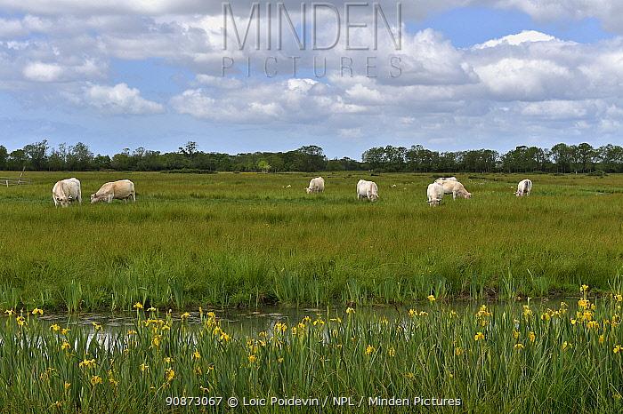 Landscape of Poitevin marsh, Vendee, France.