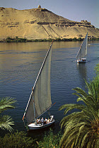 Feluccas sailing on the Nile River before the mausoleum of the Aga Khan and the tombs of the nobles, near Aswan, Egypt  -  Gerry Ellis