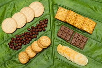 African Oil Palm (Elaeis guineensis) oil is an ingredient in all of these foods, including crackers, cereal, cookies, chips, and chocolate, Tawau Hills Park, Sabah, Borneo, Malaysia  -  Sebastian Kennerknecht