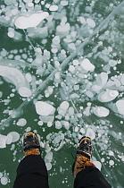 Frozen gas bubbles beneath surface of frozen lake, Abraham Lake, Canadian Rockies, Alberta, Canada