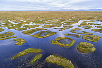 Coastal plain wetlands showing ponds and polygon formations, Arctic National Wildlife Refuge, Alaska