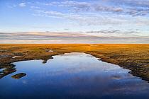 Coastal plain wetlands, Arctic National Wildlife Refuge, Alaska