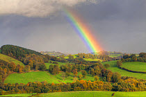 Rainbow and stormclouds over farmland with sheep in pasture, near Tregynon, Powys, Wales, November  -  Richard Becker/ FLPA