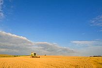 Barley (Hordeum vulgare) crop, Claas combine harvester harvesting ripe field, Norfolk, England, August  -  Mike Powles/ FLPA