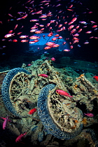 World War II British motorbikes (Norton 16H) stacked up on the back of truck in the hold of wreck of HMS Thistlegorm, with soldierfish (Myripristis murdjan) swimming above Shaab Ali, Sinai, Egypt Red...  -  npl/ npl
